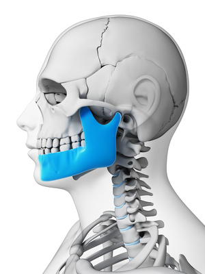 3d rendered illustration - jaw bone-